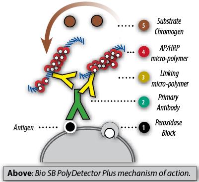 Bio-SB-PolyDetector-PLUS-HRP-MOA