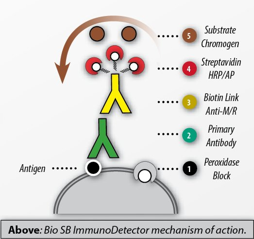 ImmunoDetector-Mechanism-of-Action