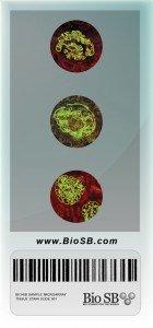 Slide_Antibodies_Immunoflourescence
