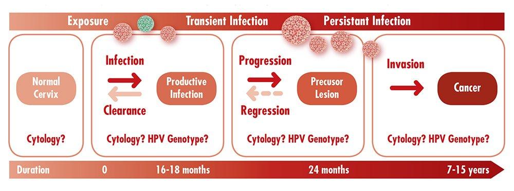 VA-cervical-cancer-progression